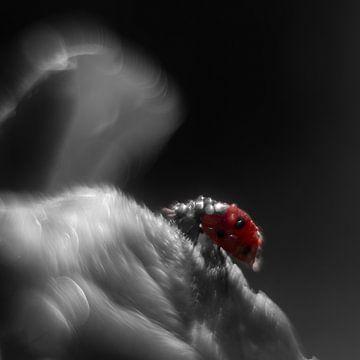 Zwart-witfoto met een rood lieveheersbeetje van Anne Ponsen