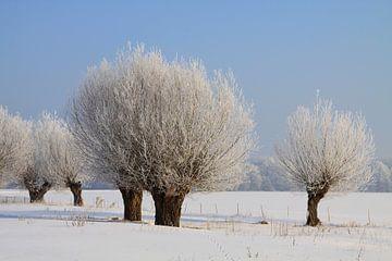 Winterlandschaft mit Kopfweiden von Karina Baumgart