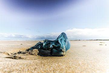 Blauw op het strand van