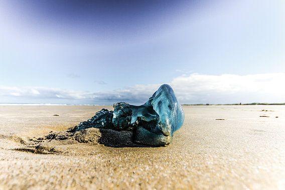 Blauw op het strand van Foto van Anno