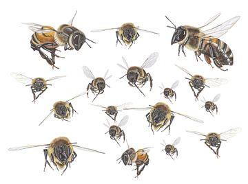 Honingbijen in vlucht van Jasper de Ruiter