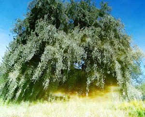 Tree Magic 37