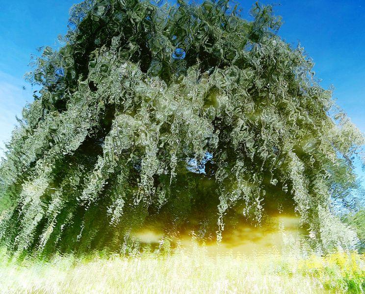 Tree Magic 37 van MoArt (Maurice Heuts)
