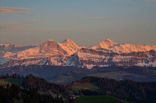 Eiger Mönch und Jungfrau mit Alpenglühen beim Sonnenuntergang