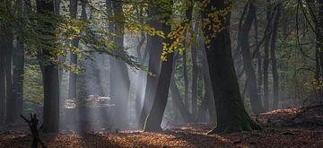 Wald der tanzenden Bäume von René van Leeuwen