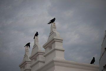 kraaien aan de tempel. van Rony Coevoet