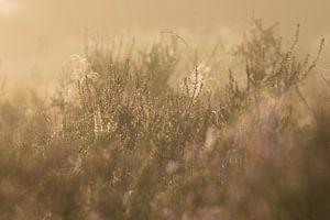 spinnenwebben in de mist