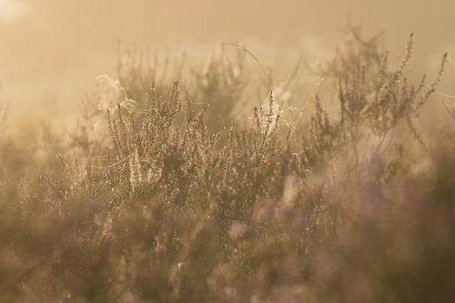 spinnenwebben in de mist van Francois Debets