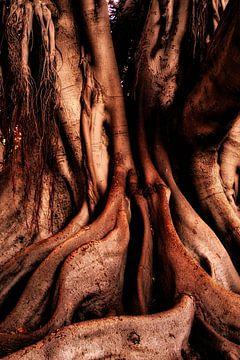 Abstracte wortels rubberboom van Dieter Walther