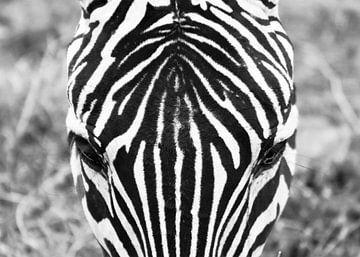 Zebra von Esther van der Linden