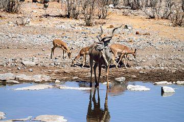 Kudu-Mann von Merijn Loch