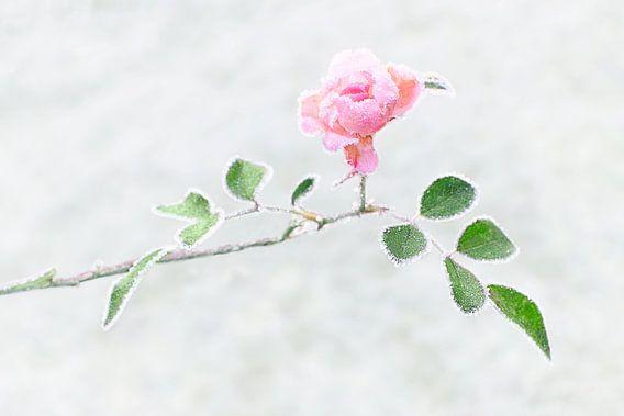 Bevroren roos van Christa Thieme-Krus