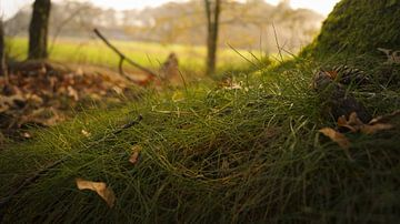 Grün wie Gras von Esmée Kiezebrink