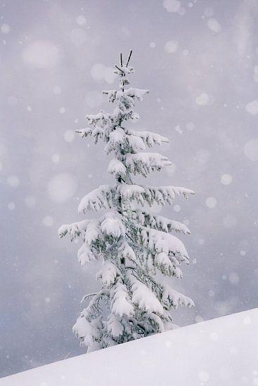 Spar in de sneeuw