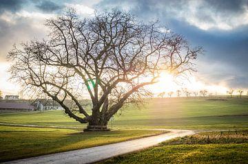 Coucher de soleil sur le tilleul sur Jürgen Schmittdiel Photography