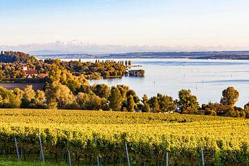 Wijngaarden bij Überlingen aan de Bodensee van Werner Dieterich
