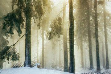 Zelfs de donkerste bossen .. van Lars van de Goor