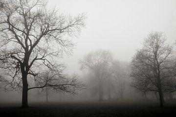 Parklandschap met bomen in de mist