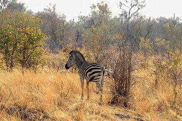 Zebra im Wildpark von Merijn Loch