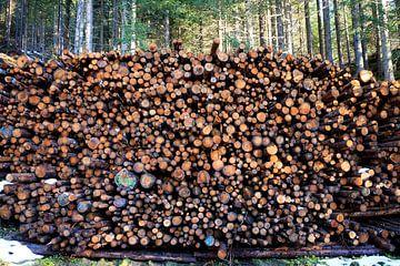 Une sorte de forêt aussi sur Ginkgo Fotografie