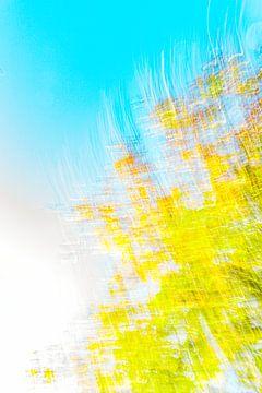 gelb blau mit weiß von Jan Peter Jansen