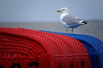 Zeemeeuw op strandstoel van