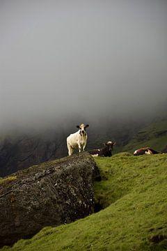 Isländische Kuh schaut über ihre Felder von Elisa Hanssen