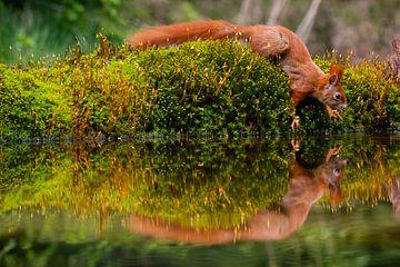 Squirrel on the edge van Kristof Piotrowski