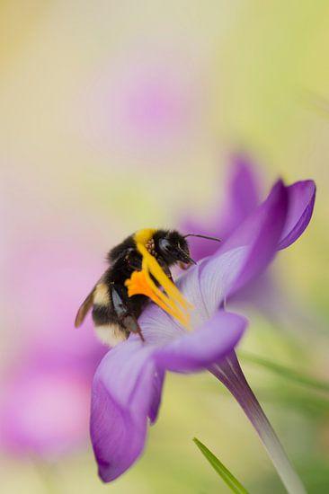 De  vrolijke kleuren van de lente 1 van Birgitte Bergman