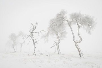 Grillige bomen in sneeuwlandschap van Michel Lucas