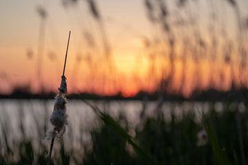 Gehstock mit Sonnenuntergang von thomas van der Wijngaard