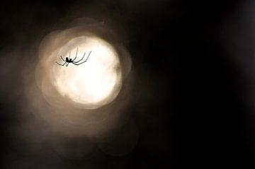 Silhouette spin van Mees Tempelaar
