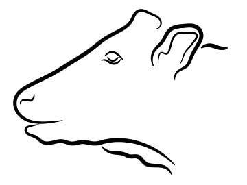 Kuh Kopf Abbildung von Jan Brons