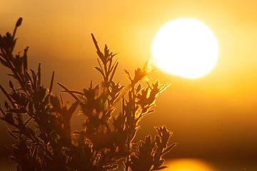 Coucher de soleil sur le lac sur Harm-Jan Tamminga