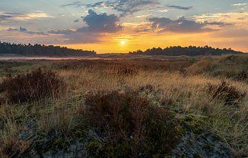 Zonsopkomst op de Loonse en Drunense duinen van Domenique van der Horst