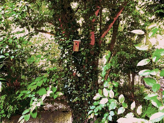 Tree Magic 49 van MoArt (Maurice Heuts)