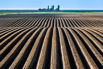 Landbouwgrond in het noorden van Friesland vlak onder de Noordzeedijk sur Harrie Muis