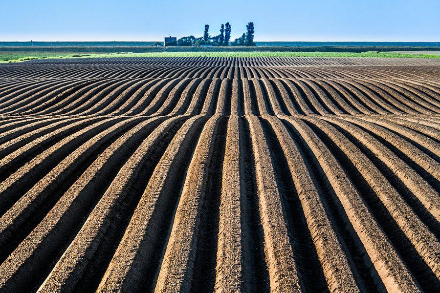 Landbouwgrond in het noorden van Friesland vlak onder de Noordzeedijk van Harrie Muis