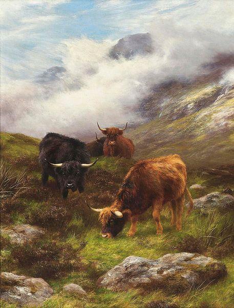 Highland Cattle Grazing van Antonije Lazovic