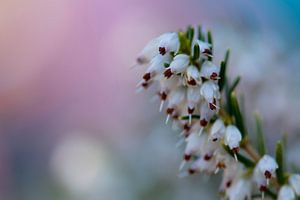 Bloemen in de lente - kleurrijk achtergrond (Macro) van