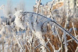 Winter wonderland van