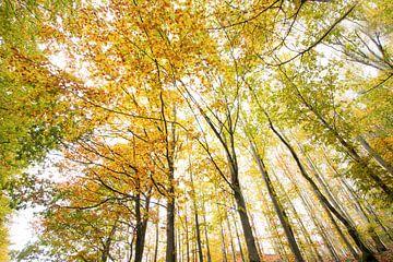 Herfst in de lucht van Ellis Pellegrom