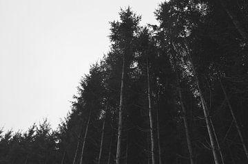 Hele lange bomen aan de rand van het bos van Vera Boels