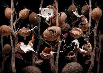Coco nutellae von Olaf Bruhn