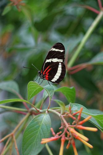 Portrait van een mooie kleurige vlinder op een blad