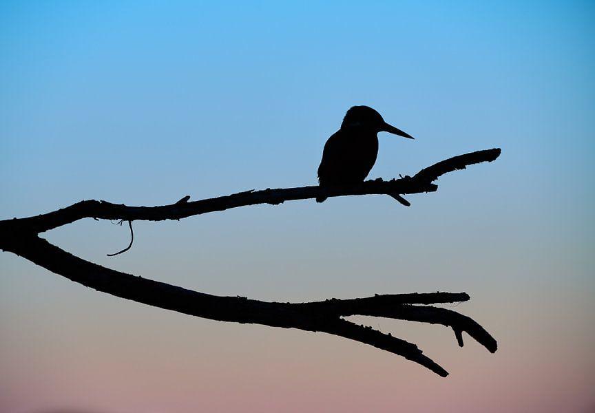 Vroege vogel van Corné van Oosterhout