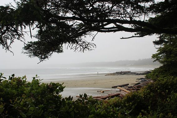 Beach in Tofino   Schooner Cove