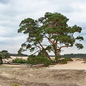 Zandverstuiving Veluwe van Anouschka Hendriks