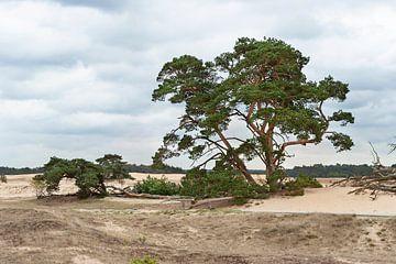 Zandverstuiving Veluwe