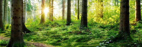 Wonderful nature van Günter Albers